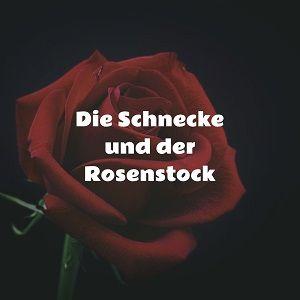 Die Schnecke und der Rosenstock